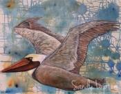 alice's pelican