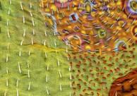 texture1
